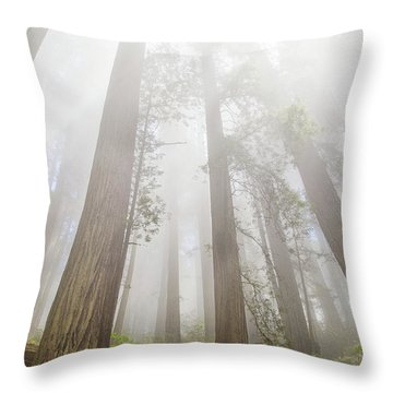 Fog In The Redwoods Throw Pillow