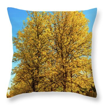 Throw Pillow featuring the photograph Foliage by Dheeraj Mutha