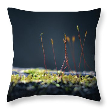Throw Pillow featuring the photograph Follow by Michelle Wermuth