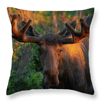 Forest King Sunrise Throw Pillow