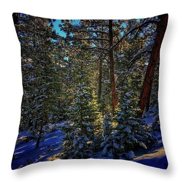 Throw Pillow featuring the photograph Forest Shadows by Dan Miller