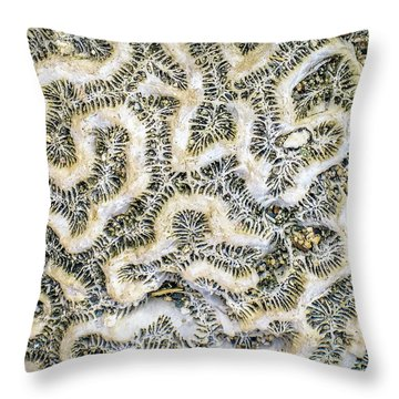 Fossilized Brain Coral Throw Pillow