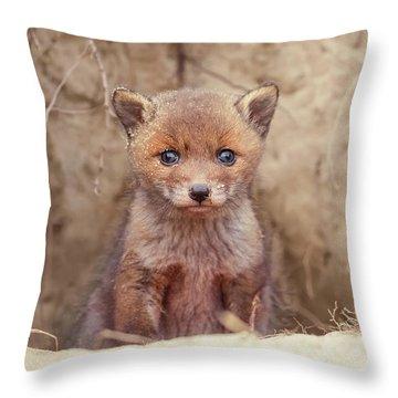 Fox Kit Series - Newborn Fox Baby Throw Pillow