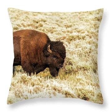 Throw Pillow featuring the photograph Roam Free by Dheeraj Mutha