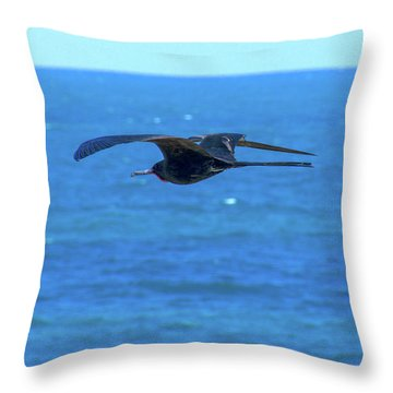 Frigatebird Throw Pillow