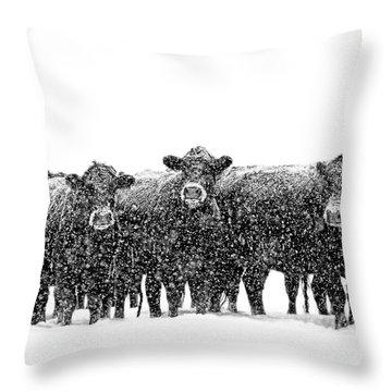 Frosty Faces Black Angus Cows Montana Throw Pillow