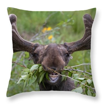 Silly Throw Pillows