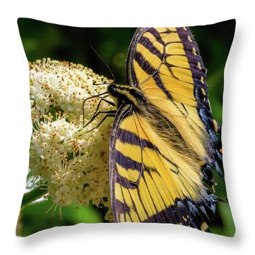 Fuzzy Butterfly Throw Pillow