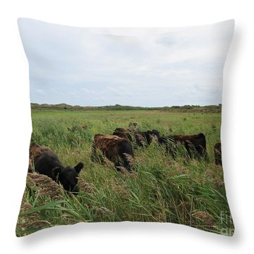Galloway Cows On Texel North Holland Throw Pillow