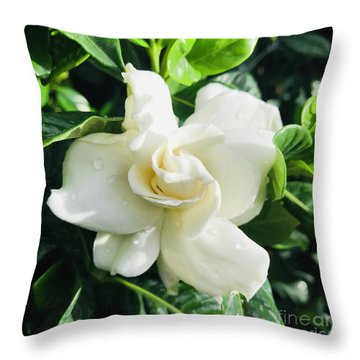 Gardenia Closeup Square Throw Pillow
