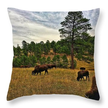Throw Pillow featuring the photograph Genesee Bison Herd by Dan Miller