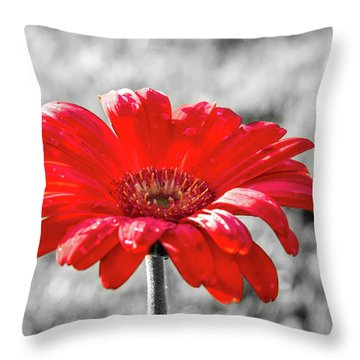 Gerbera Daisy Color Splash Throw Pillow