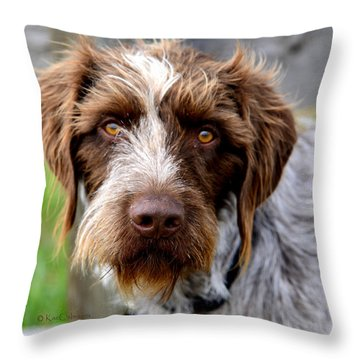 German Wirehaired Pointer Throw Pillows
