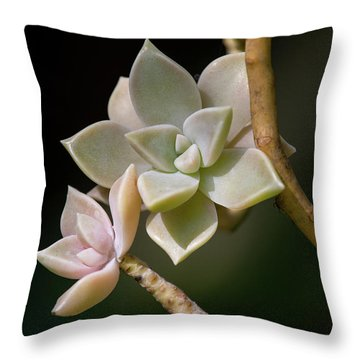 Throw Pillow featuring the photograph Ghost Plant by Dale Kincaid