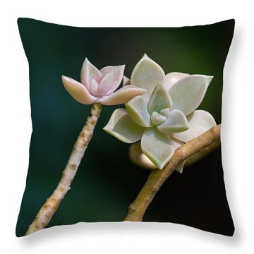 Throw Pillow featuring the photograph Ghost Plant Succulent by Dale Kincaid