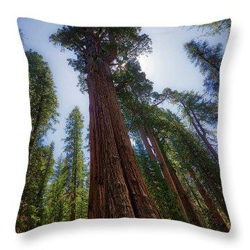 Giant Sequoia Tree Throw Pillow