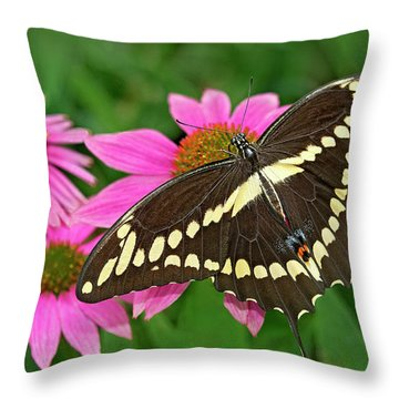 Giant Swallowtail Papilo Cresphontes Throw Pillow