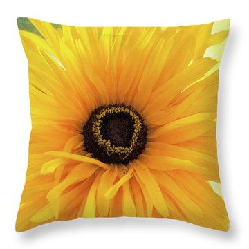 Throw Pillow featuring the photograph Gloriosa Daisy by Ann Jacobson
