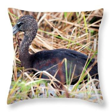 Glossy Ibis 123015 Throw Pillow