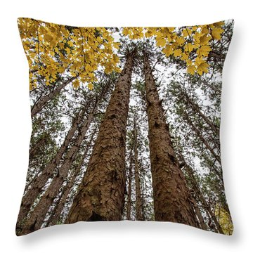 Gold Among The Pines 1 Throw Pillow
