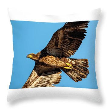 Throw Pillow featuring the photograph Golden Eagle II by Jeff Phillippi