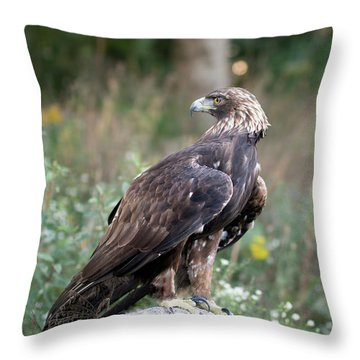 Golden Eagle On Rock 92515 Throw Pillow