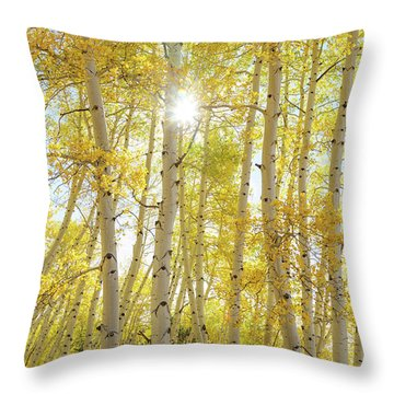Throw Pillow featuring the photograph Golden Sunshine On An Autumn Day by James BO Insogna