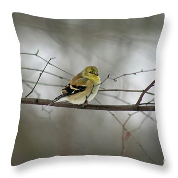 Goldfinch In Winter Looking At You Throw Pillow