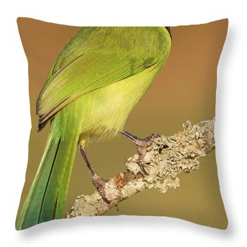 Gorgeous Green Jay Throw Pillow