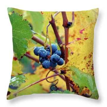 Throw Pillow featuring the photograph Grapes In Tuscany by Mark Duehmig