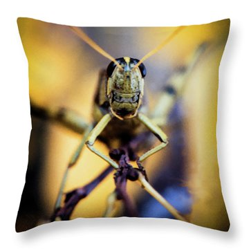 Throw Pillow featuring the photograph Grasshopper by Jon Burch Photography