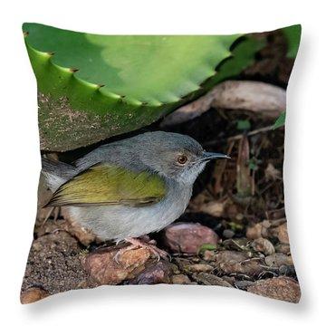 Gray-backed Camaroptera Throw Pillow