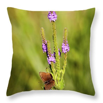 Throw Pillow featuring the photograph Gray Copper On Blazing Star by Jeff Phillippi