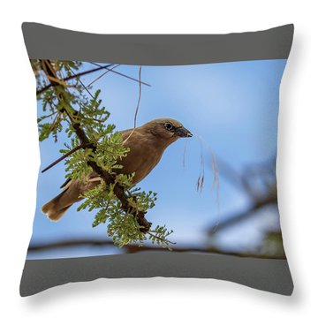Gray-headed Social Weaver Throw Pillow