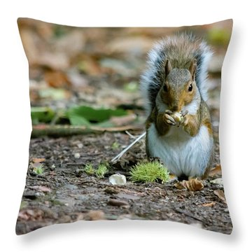 Throw Pillow featuring the photograph Gray Squirrel Stood Upright Eating A Nut by Scott Lyons