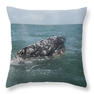 Gray Whale In Bahia Magdalena Throw Pillow