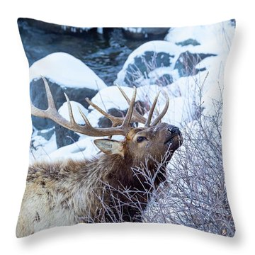 Grazing Elk Throw Pillow