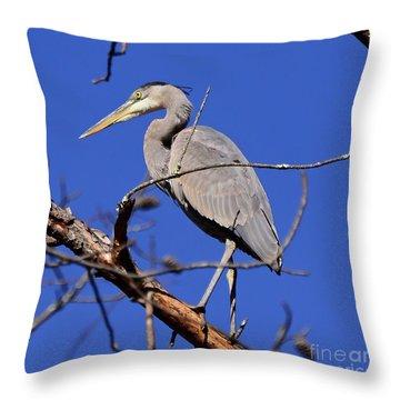 Great Blue Heron Strikes A Pose Throw Pillow