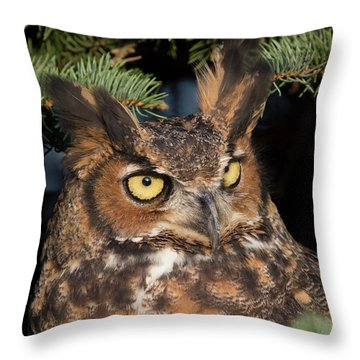Great Horned Owl 10181802 Throw Pillow