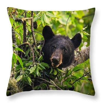 Great Smoky Mountains Bear - Black Bear Throw Pillow