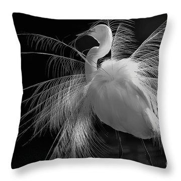Great White Egret Portrait - Displaying Plumage  Throw Pillow