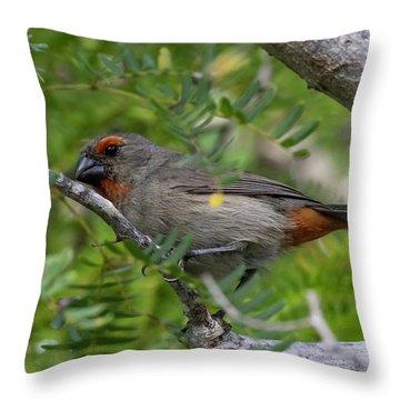 Greater Antillean Bullfinch Throw Pillow