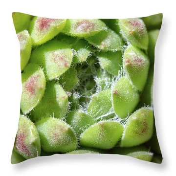 Green Sempervivum Top Down Close Up Throw Pillow