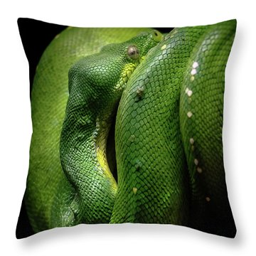 Green Tree Boa Throw Pillow