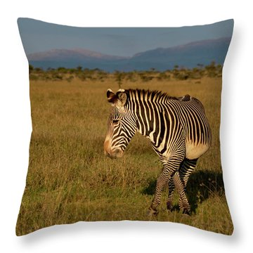 Grevy's Zebra Throw Pillow