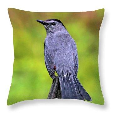Grey Catbird Throw Pillow