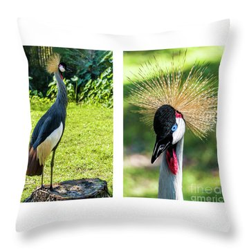 Grey Crowned Crane Gulf Shores Al Collage 8 Diptych Throw Pillow