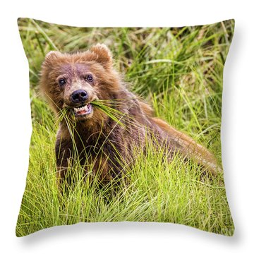 Grizzly Cub Grazing, Alaska Throw Pillow