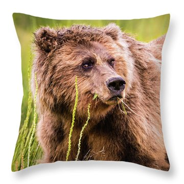 Grizzly In Lake Clark National Park, Alaska Throw Pillow