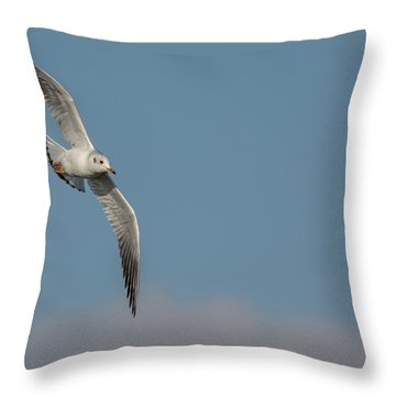 Throw Pillow featuring the photograph Gull In Flight by Scott Lyons